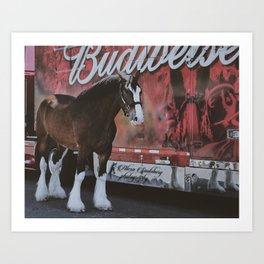 Jack the Budweiser Clydesdale Art Print