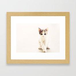 White and Grey Kitten Framed Art Print