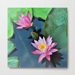 Lotus Blossoms Metal Print
