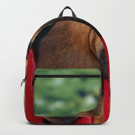 puppy big-eared fence rest sleep Backpack