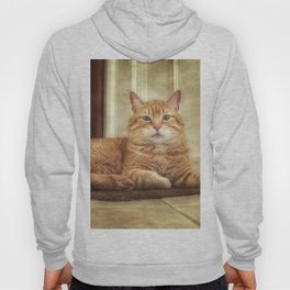 Cattitude Is Everything. Hoody