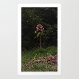 Lone Flower in the Country Art Print
