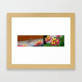 Flowers in Croatia Framed Art Print