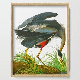 Great blue heron John James Audubon Vintage Scientific Bird Illustration Serving Tray