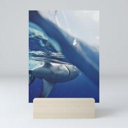 Shark on the Surface Mini Art Print
