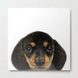 Dachshund, Miniature Dachshund portrait original painting by miart Metal Print