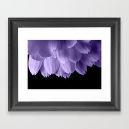 Ultra violet purple flower petals black Framed Art Print