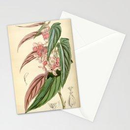 Begonia falcifolia Stationery Cards