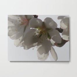 Almond Blossom Series 3 Metal Print