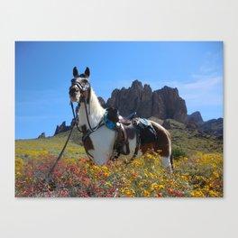 Springtime In The Arizona Desert Canvas Print