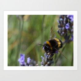 Bee & Lavender 2 Art Print