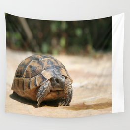 Young Spur Thighed Tortoise Looking Out of Its Shell Wall Tapestry