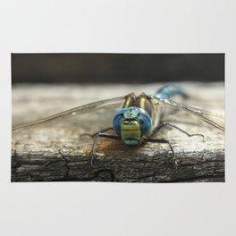 Brachytron pratense -  Hairy Dragonfly. Rug