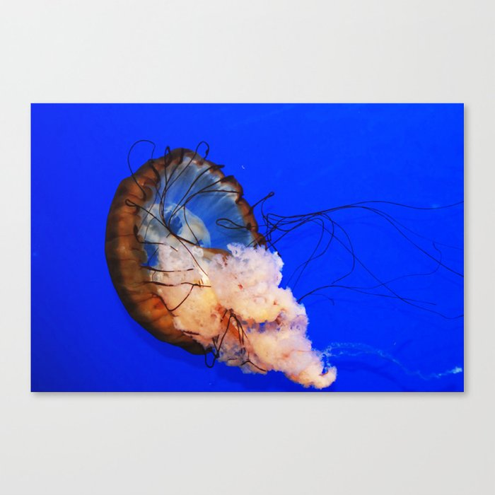 Underwater Life Canvas Print