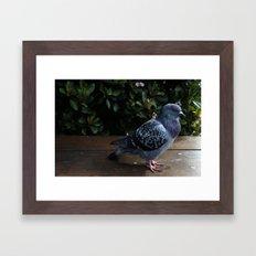 Pigeon Framed Art Print