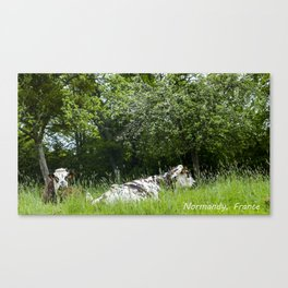 2 cows in Normandy France Canvas Print