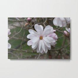 Large White Spring Flower Metal Print