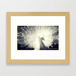 white peacock Framed Art Print