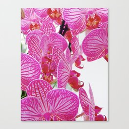 Alluring Orchids Canvas Print
