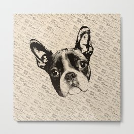 Boston Terrier dog Metal Print
