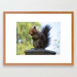Squirrel with Nut Framed Art Print