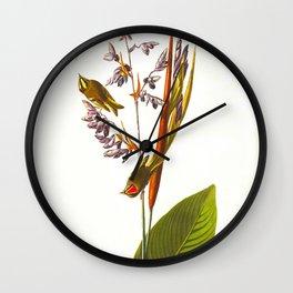 Golden crested-Wren Vintage Scientific Bird Illustration Wall Clock