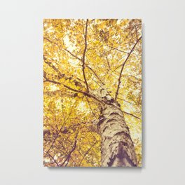 White Birch in the Fall Metal Print