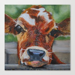 Calf Canvas Print