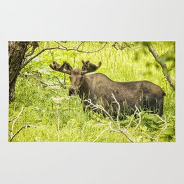 Bull Moose in Kincaid Park, No. 2 Rug