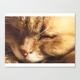 Cat Serenity  Canvas Print