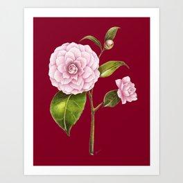 Botanical rose illustration red Art Print