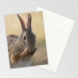 An Eye on You Eastern Cottontail Rabbit Stationery Cards