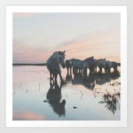 Camargue Horses I ... Art Print