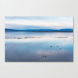Flamingoes on El Calafate, Patagonia, Argentina Canvas Print
