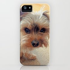 Yorkie | Dogs | Grumpy Dog | Yorkshire Terrier with Attitude iPhone SE Slim Case