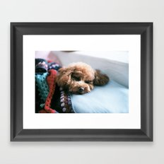 Sleeping Puppy Framed Art Print