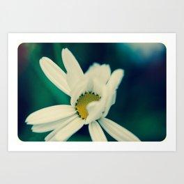 White, soft, flower Art Print
