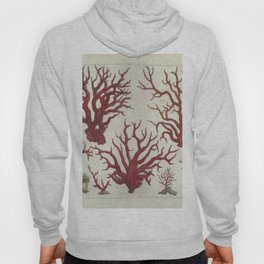 Naturalist Red Coral Hoody