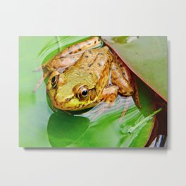 Frog on Pad Metal Print