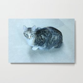 Revina the Cat with the Precious Face Metal Print