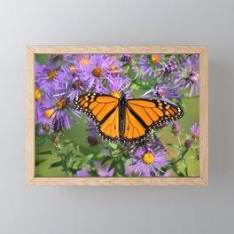 Monarch Butterfly on Wild Aster Flower Framed Mini Art Print