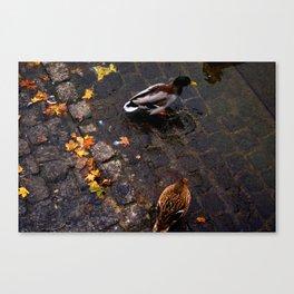 Those Zurich Birds Canvas Print