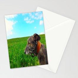 Sunny Lurcher Stationery Cards
