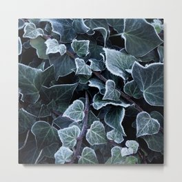 Hoarfrost Ivy Leaves Metal Print