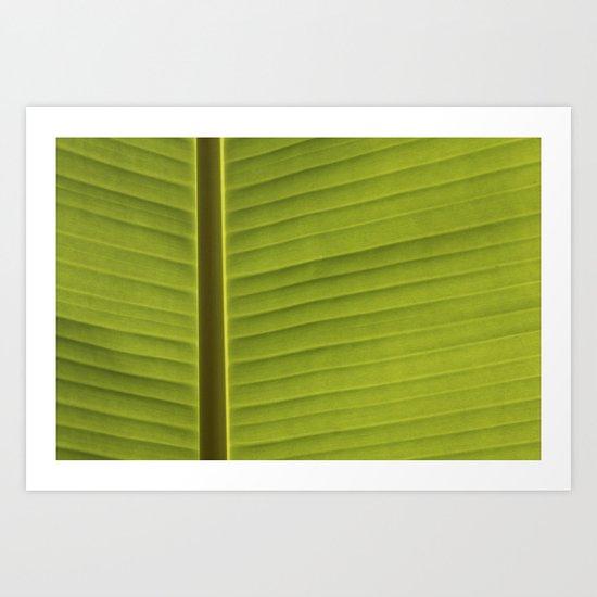 Banana Leaf IV Art Print