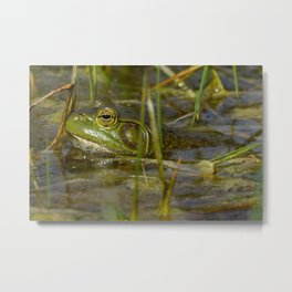 Frog in the Water Metal Print