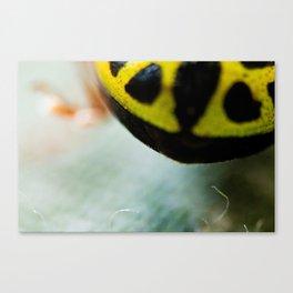 Little bug Canvas Print