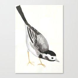 Wagtail Canvas Print