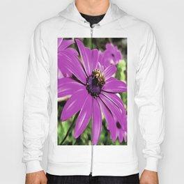 Honey Bee On A Spring Flower Hoody