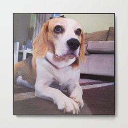 The Beagle Adventures Metal Print